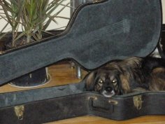 Luna's favorite place to snuggle up and watch me practice for my next gig.